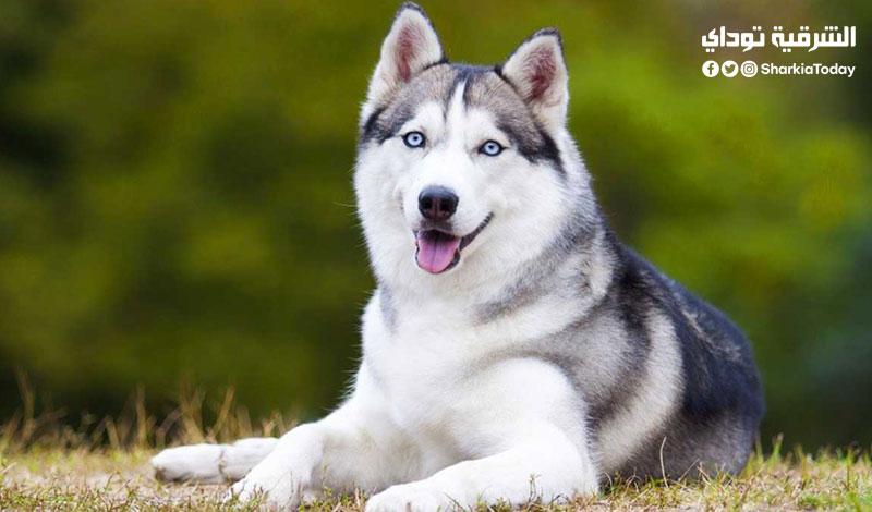 قانون حيازة الكلاب الجديد