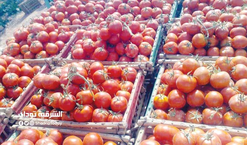 زيادة أسعار الطماطم