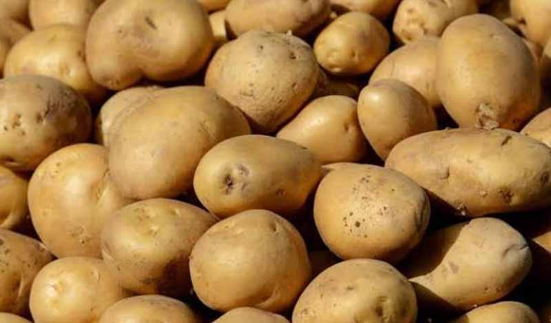 أسعار البطاطس