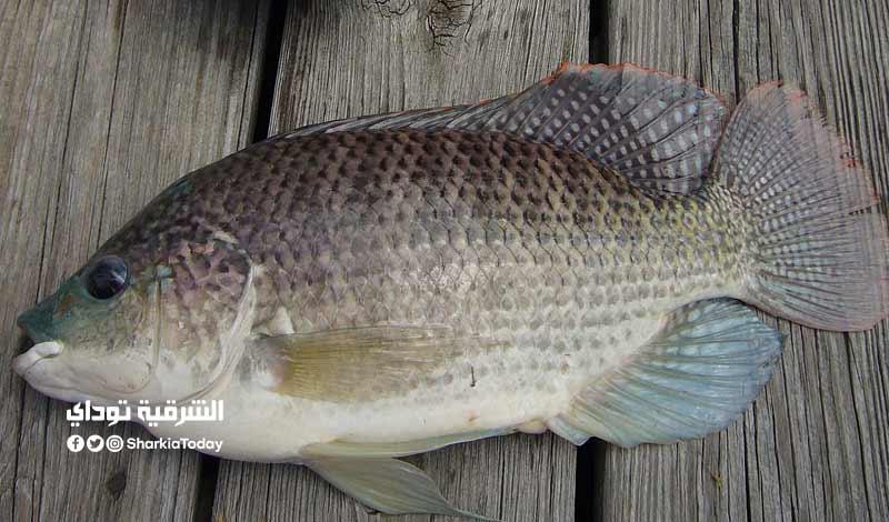 أنواع من الأسماك ضارة قد تسبب التسمم