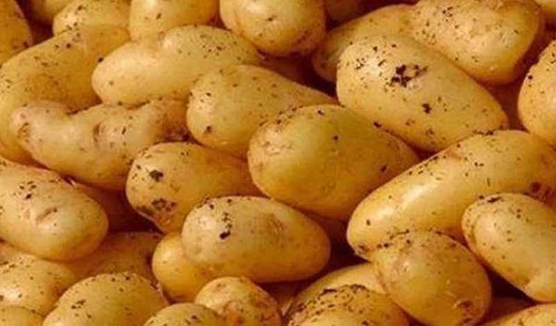 الزراعة تحذر من البطاطس